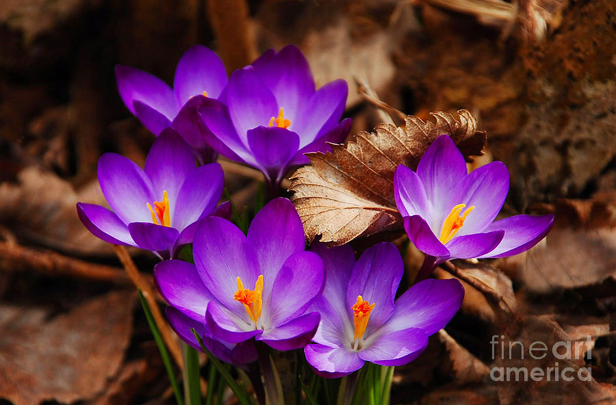 Flower Photograph - First Signs Of Spring by Elaine Manley