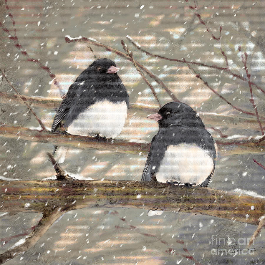 Birds Drawing - First Snow Dark-eyed Juncos by Laurie Musser