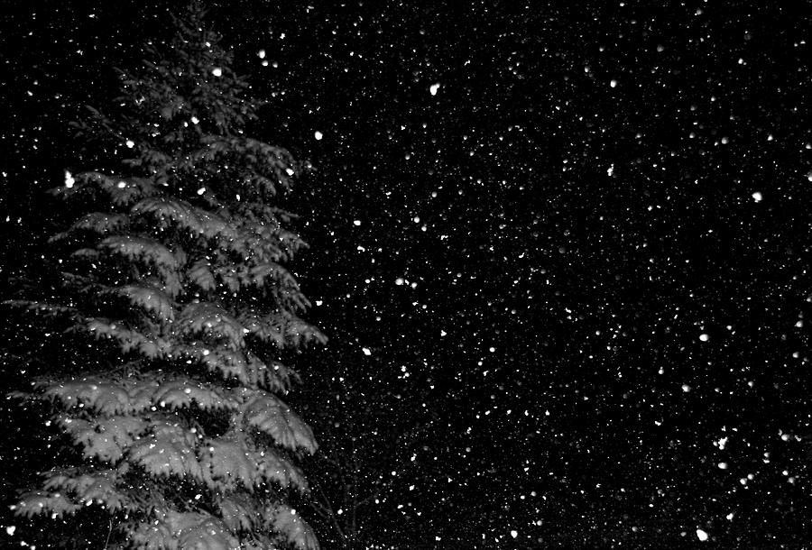 Snow Photograph - First Snow by Denise Beverly