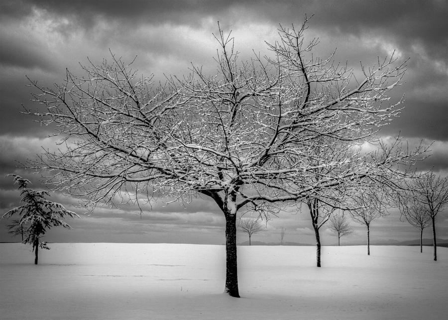 Landscape Photograph - First Snow by Randy Hall