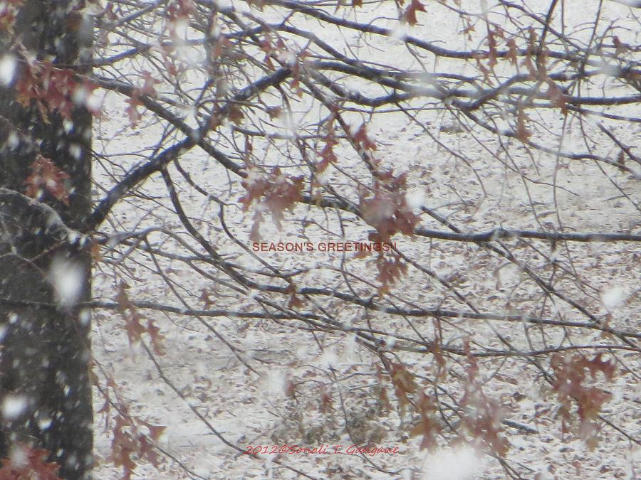 Winter Season Photograph - First Snowfall  by Sonali Gangane