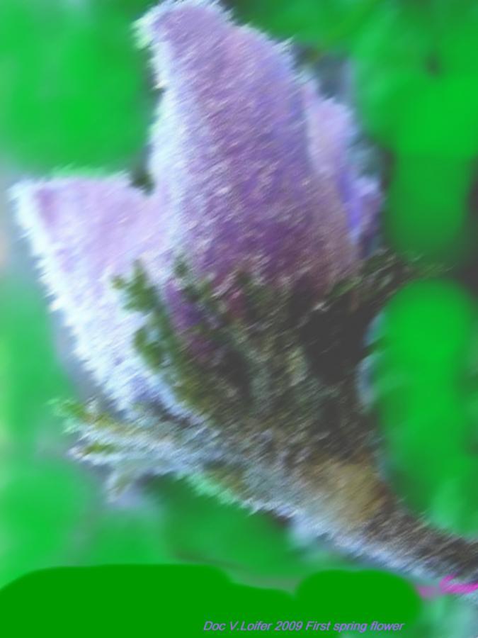 Landscape Digital Art - First Spring Flower by Dr Loifer Vladimir