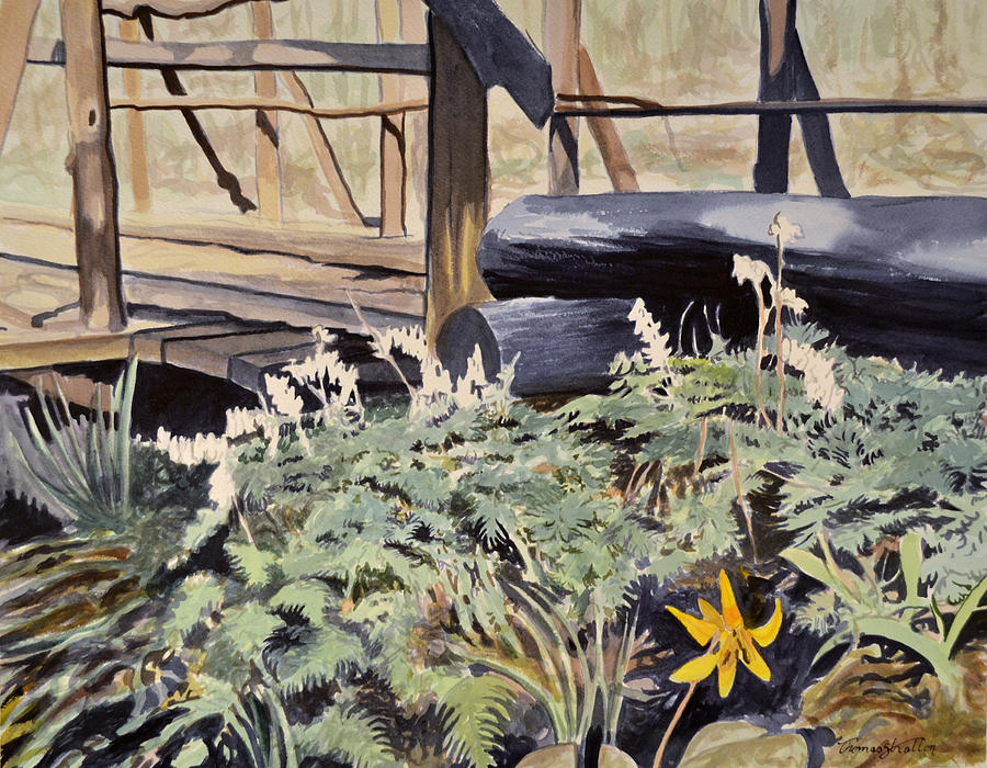 Flowers Painting - First Trout Lily by Thomas Stratton