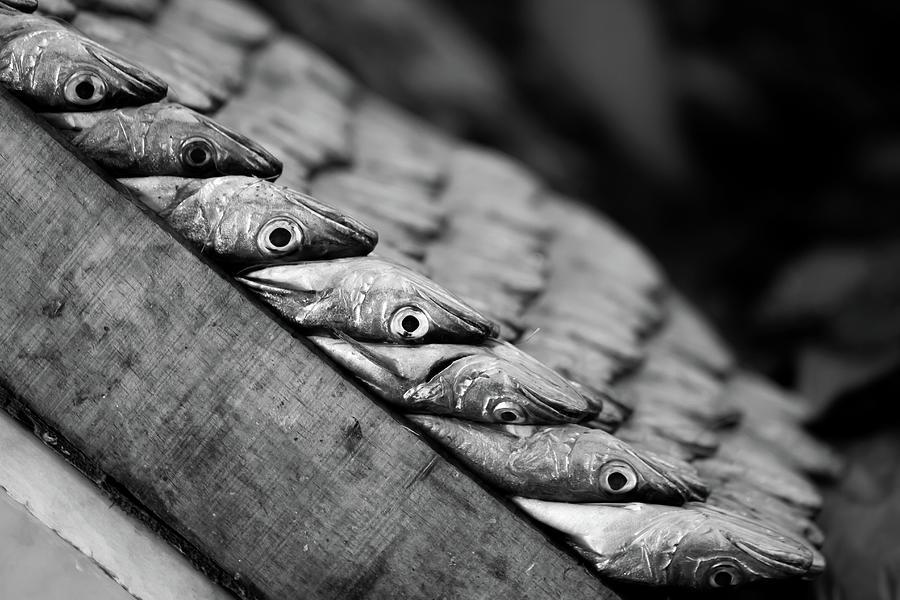 Fish At Marché Central, Casablanca Photograph by © Chaitanya Deshpande