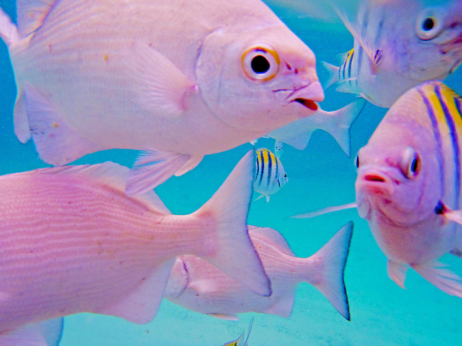 Fish Photograph - Fish Frenzy by Carey Chen