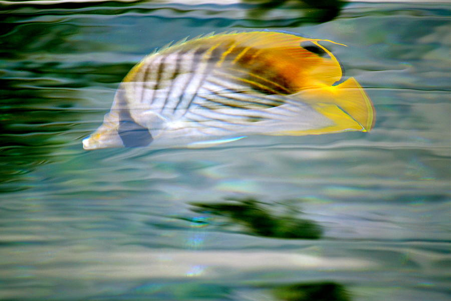 Fish Photograph - Fish In The Sunlight by Lehua Pekelo-Stearns