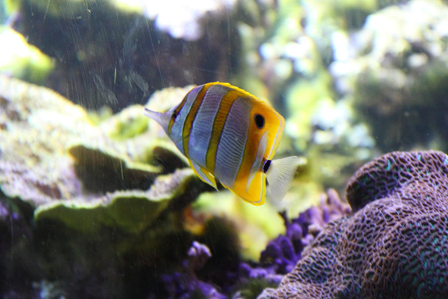 Inner Photograph - Fish - National Aquarium In Baltimore Md - 1212111 by DC Photographer