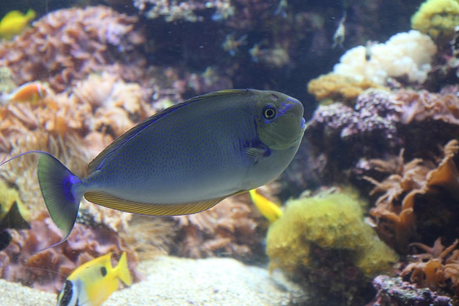 Inner Photograph - Fish - National Aquarium In Baltimore Md - 1212121 by DC Photographer