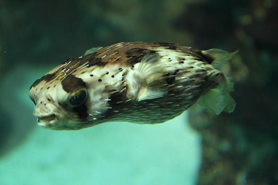 Inner Photograph - Fish - National Aquarium In Baltimore Md - 1212136 by DC Photographer