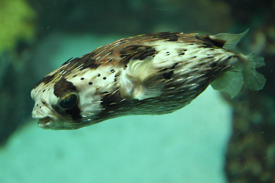 Inner Photograph - Fish - National Aquarium In Baltimore Md - 1212137 by DC Photographer