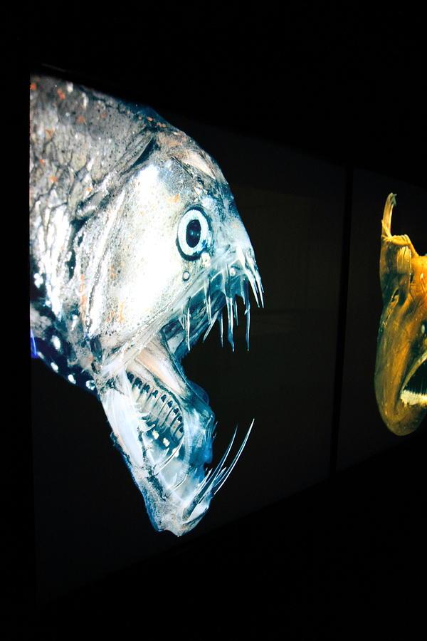 Fish - National Aquarium In Baltimore Md - 121229 ...