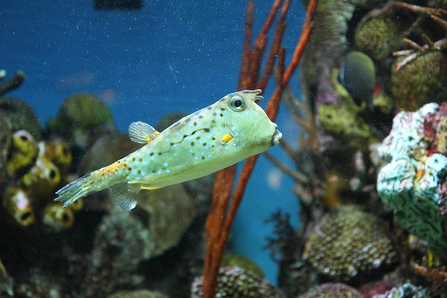 Fish National Aquarium In Baltimore Md 121233 Photograph By Dc Photographer