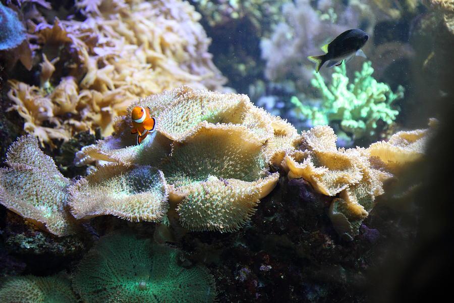 Fish - National Aquarium in Baltimore MD - 121235 ...