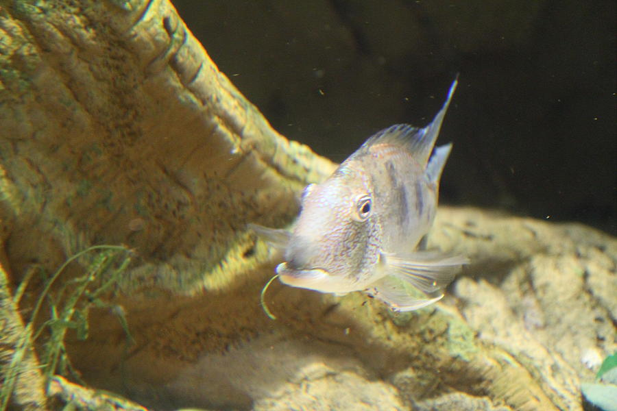 Inner Photograph - Fish - National Aquarium In Baltimore Md - 121248 by DC Photographer