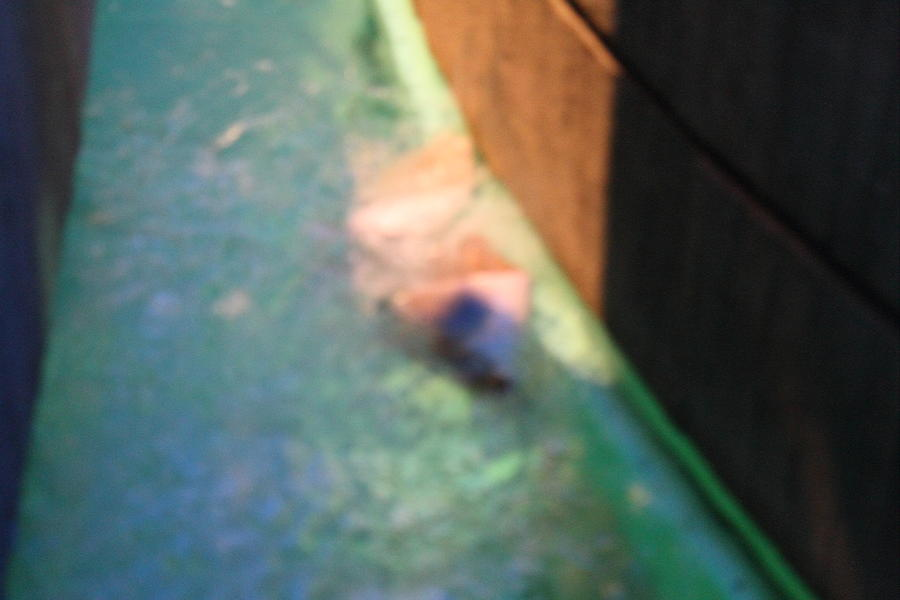 Inner Photograph - Fish - National Aquarium In Baltimore Md - 12126 by DC Photographer