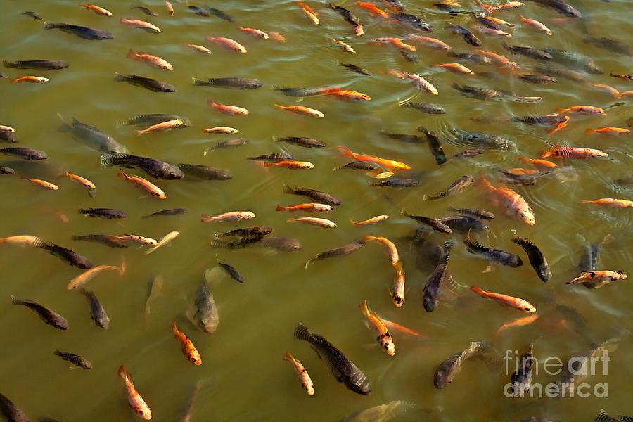 Fish Pond Photograph By Darylann Elmi