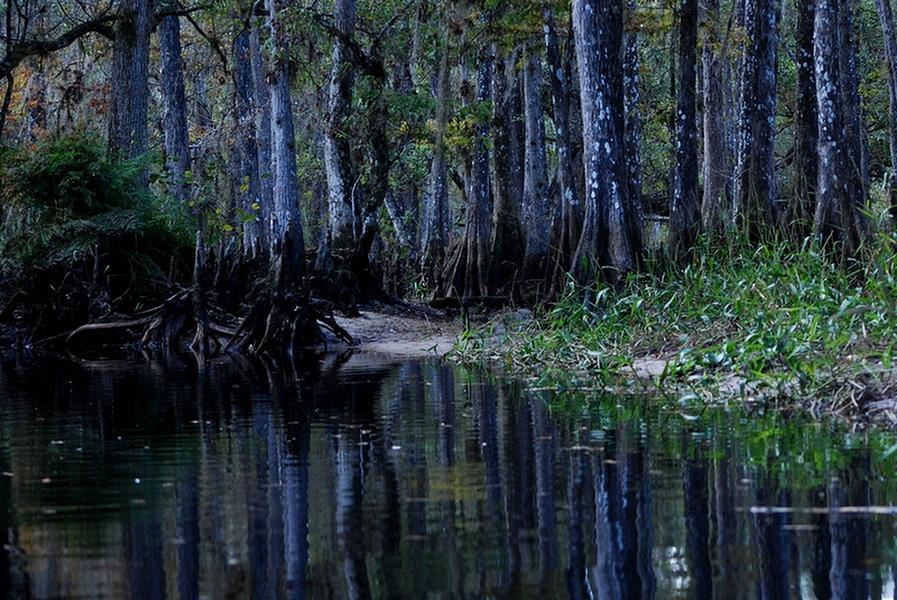 Fisheating Creek Photograph - Fisheating Creek 29 by Carol Kay
