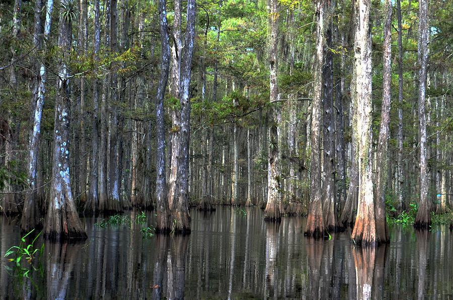 Swamp Photograph - Fisheating Creek by Bob Jackson