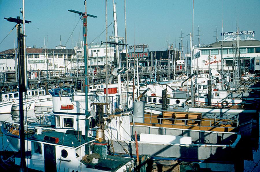 Fisherman's Wharf Photograph - Fishermans Wharf 1956 by Cumberland Warden