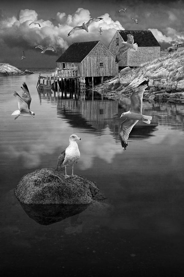 Fishermans Wharf With Flying Gulls In Peggys Cove Photograph