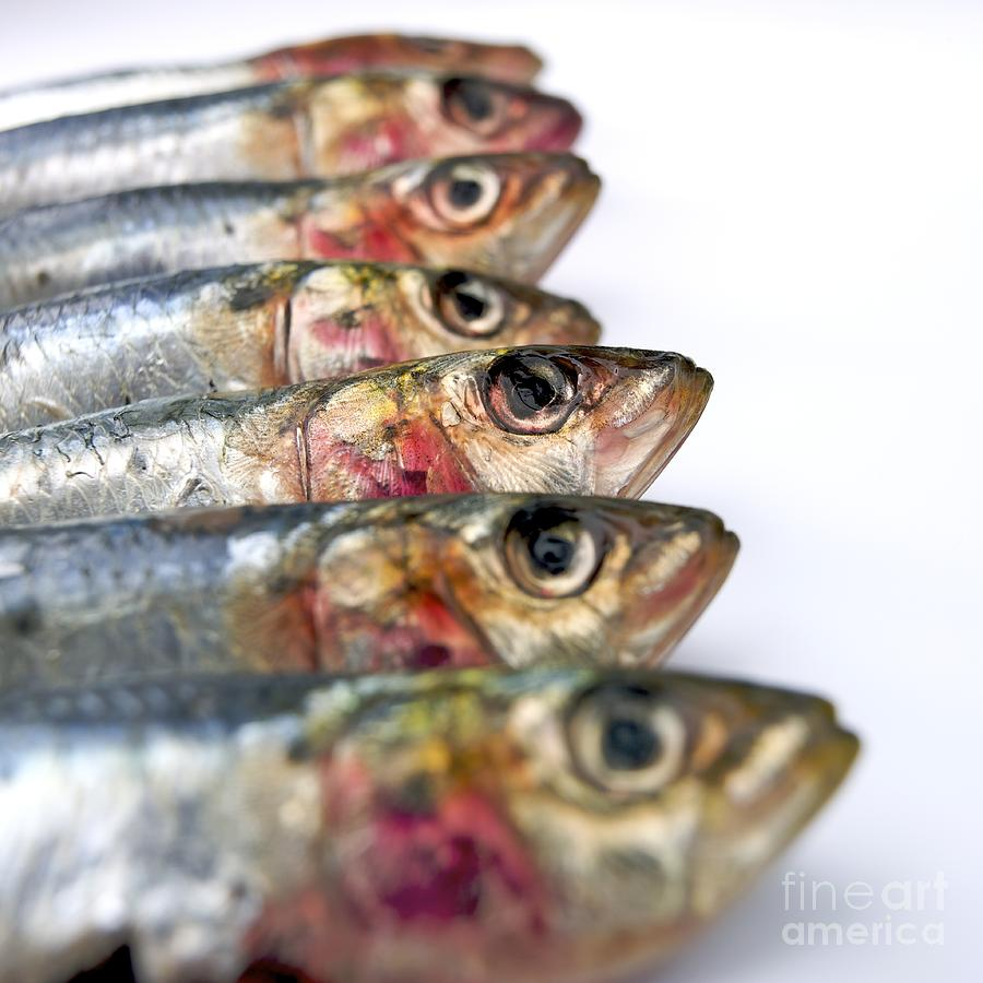 Animal Body Part Photograph - Fishes by Bernard Jaubert