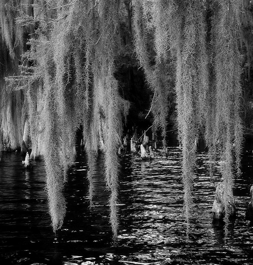 Lake Harris Photograph - Fishing Hole by David Mcchesney