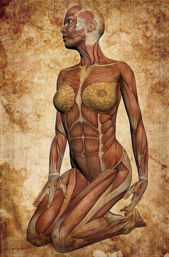 Anatomy Digital Art - Fit Female Revealed by Daniel Hagerman