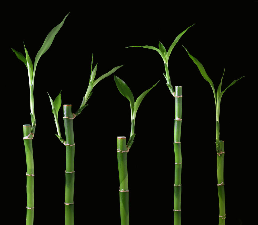 Five Bamboo On Black Photograph by Cglade