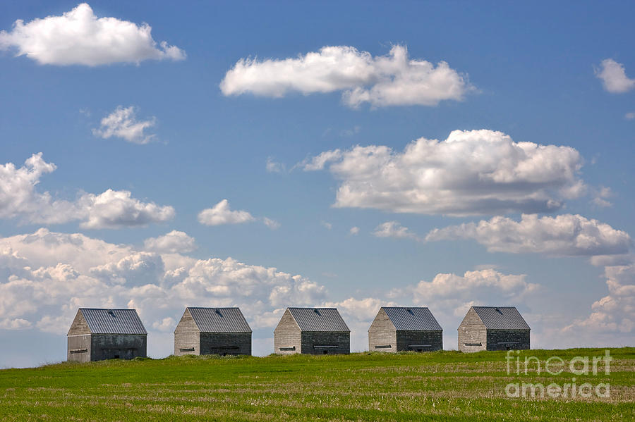 Landscape Photograph - Five Sheds On The Alberta Prairie by Louise Heusinkveld
