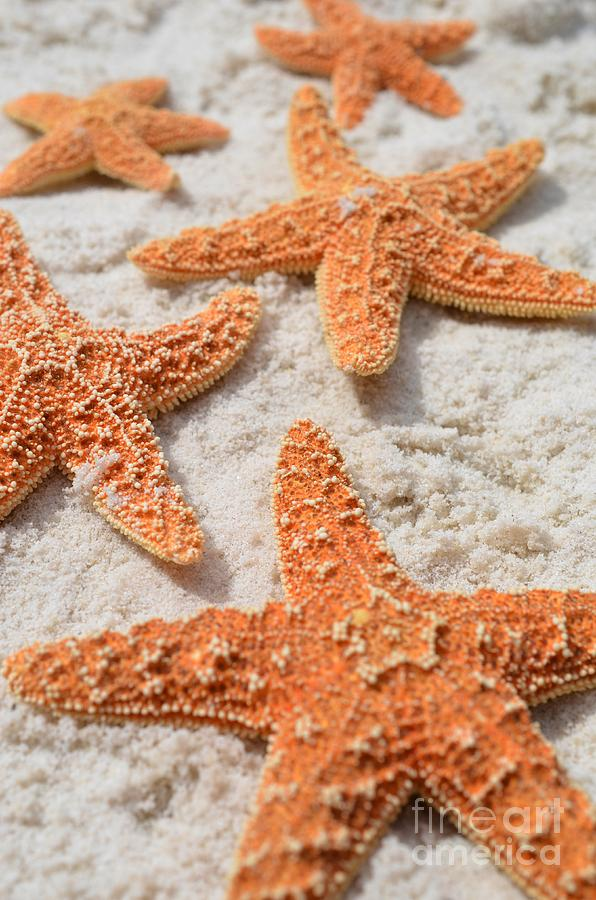 Orange Starfish Photograph - Five Starfish by Carol McGunagle