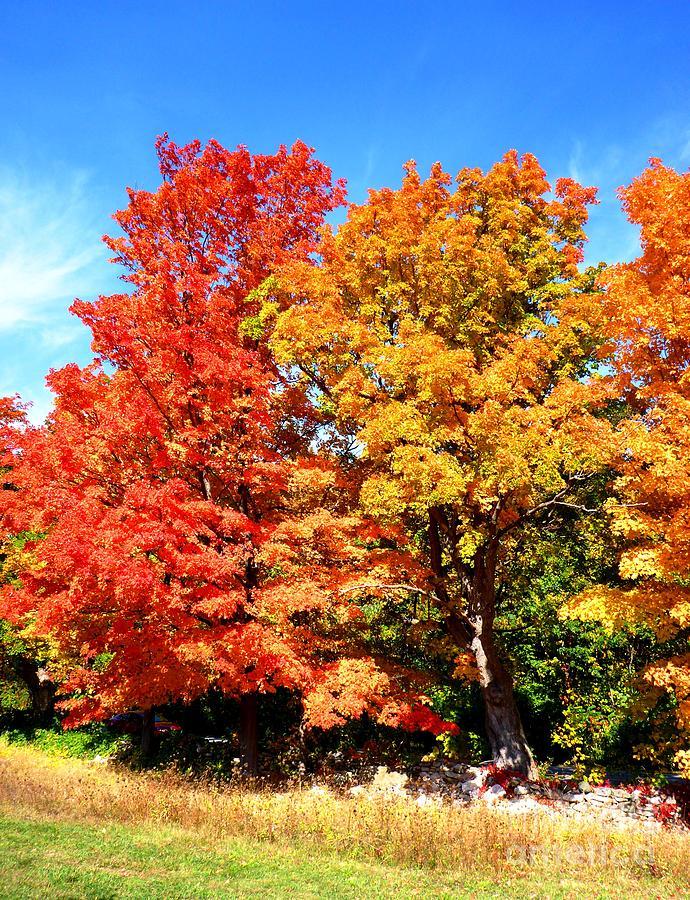Autumn Photograph - Flamboyant Autumn by Cristina Stefan