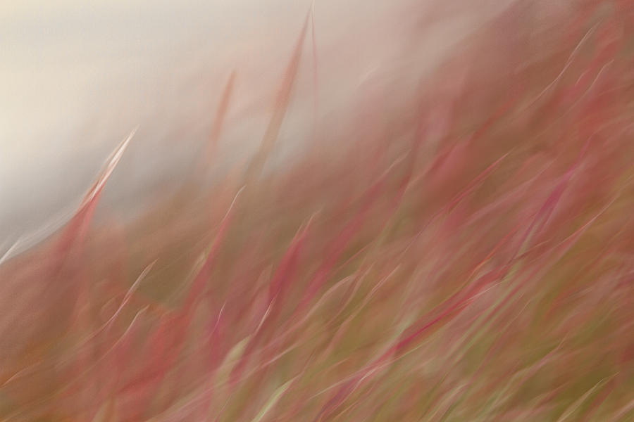 Abstracts Photograph - Flames Rising by Marilyn Cornwell