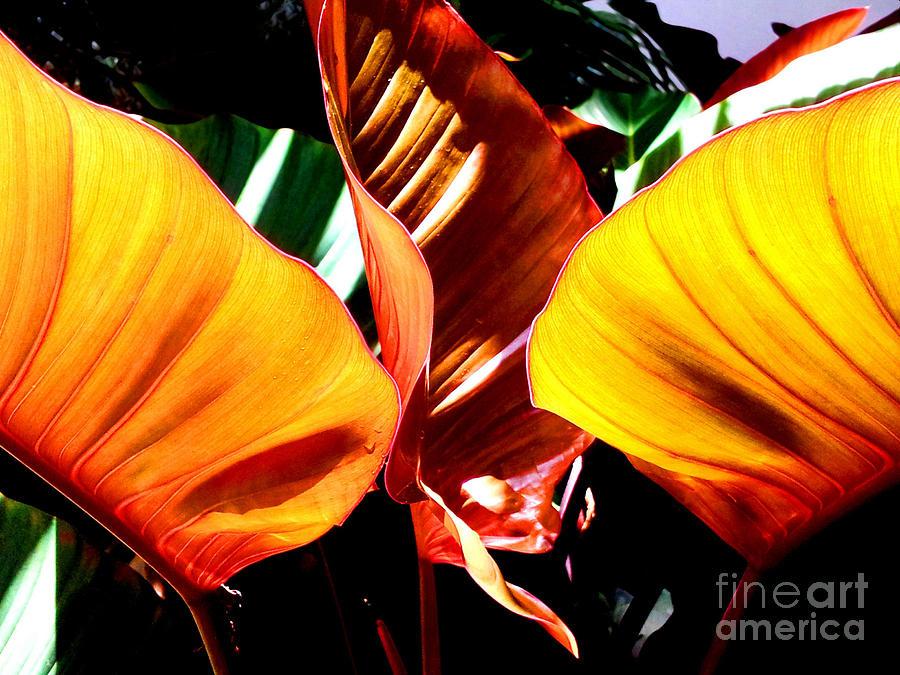 Plant Photograph - Flaming Plant by Kristine Merc