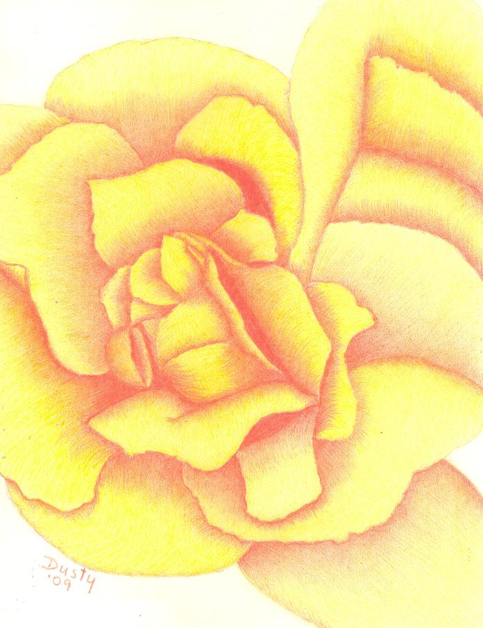 Rose Drawing - Flaming Yellow Rose by Dusty Reed