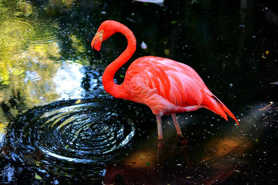 Flamingo Photograph - Flamingo 9 by Dan Dennison
