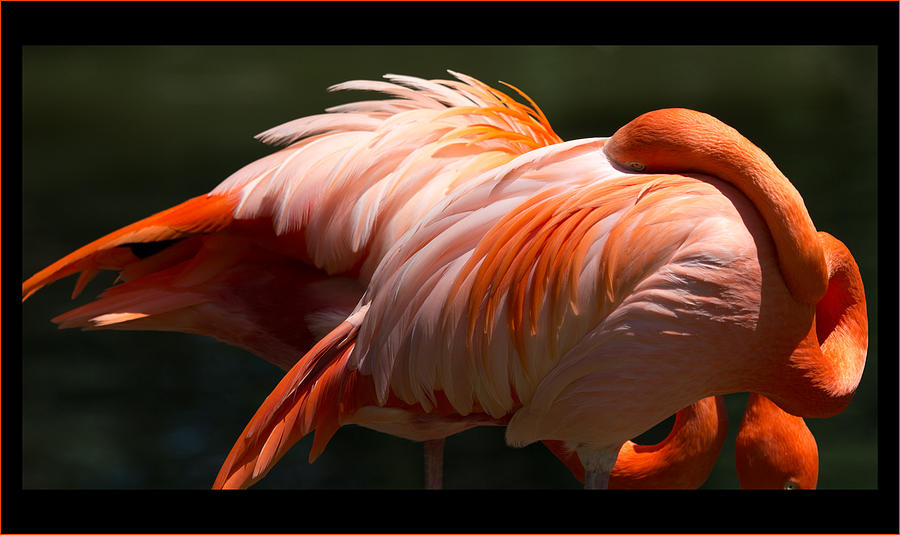 Flamingos Photograph - Flamingo Abyss by John Kunze
