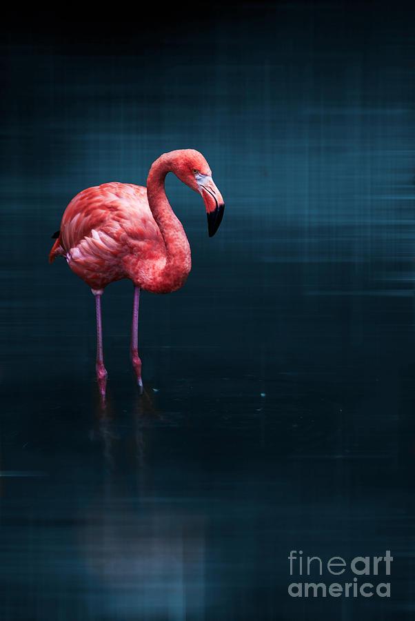 Animal Photograph - Flamingo - Blue by Hannes Cmarits