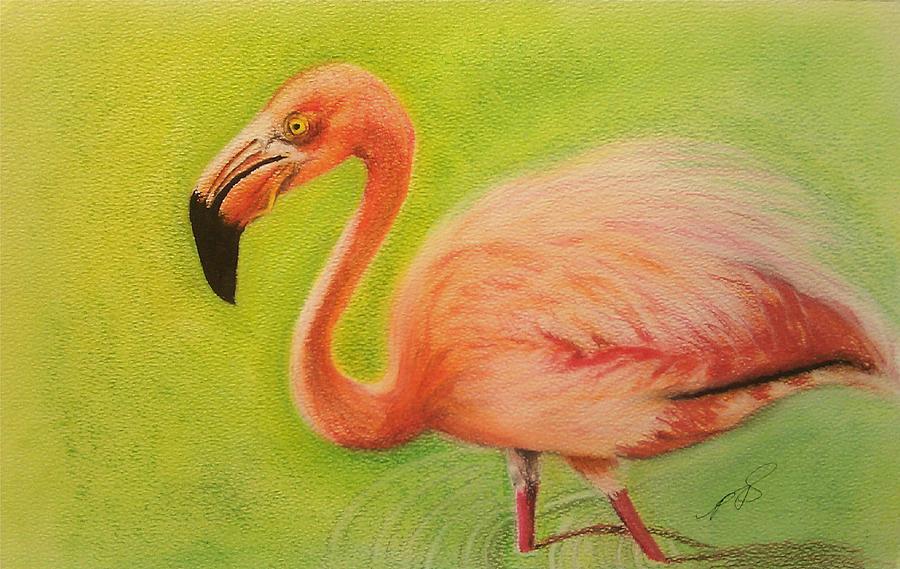 Flamingo Drawing - Flamingo II. by Paula Steffensen