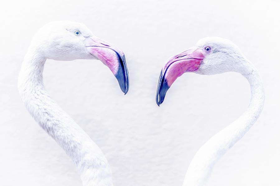 Flamingo Photograph by Mats Silvan