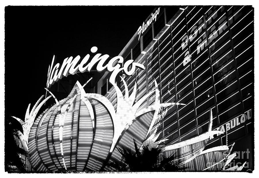 Flamingo Night View Photograph - Flamingo Night View by John Rizzuto