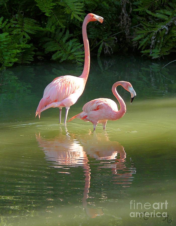 Fauna Photograph - Flamingo Stroll by Mariarosa Rockefeller