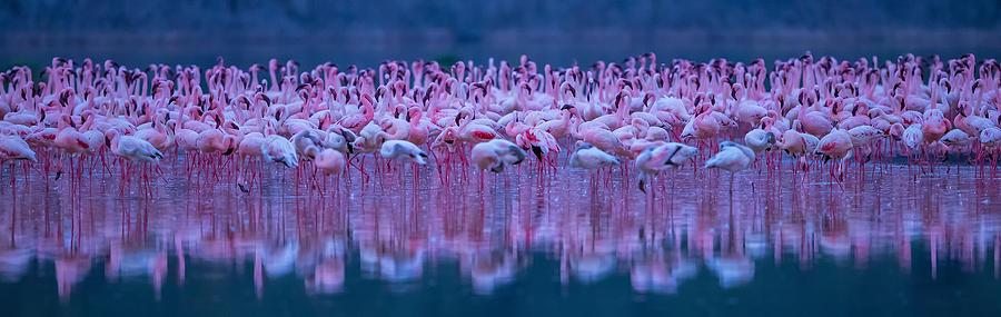 Flamingos Photograph - Flamingos by David Hua