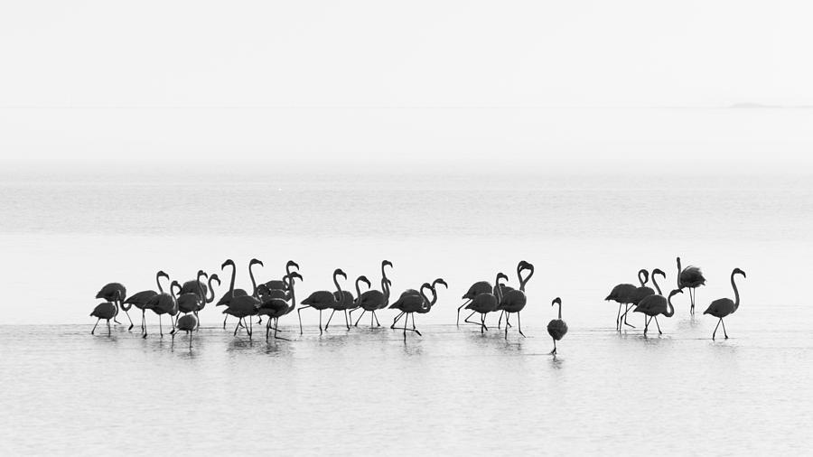 Flamingo Photograph - Flamingos by Joan Gil Raga