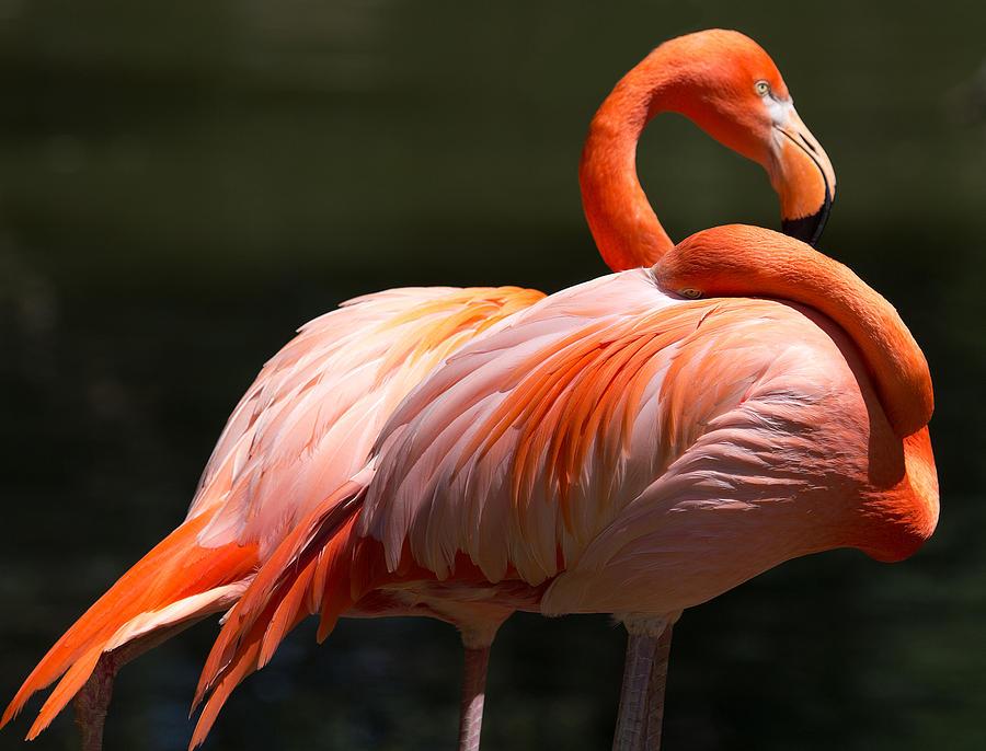 Birds Photograph - Flamingos by John Kunze