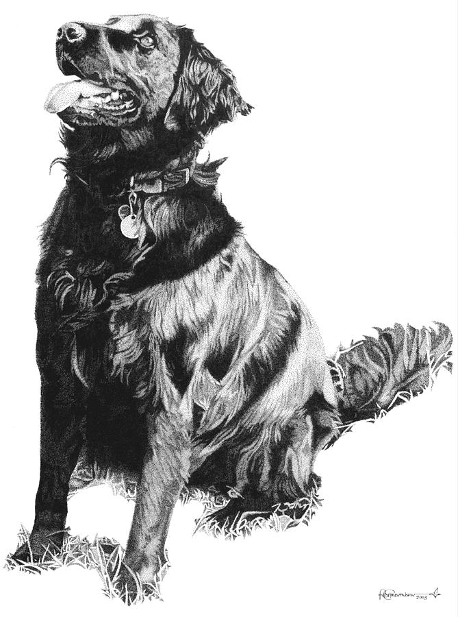 Retriever Drawing - Flat Coat by Rob Christensen
