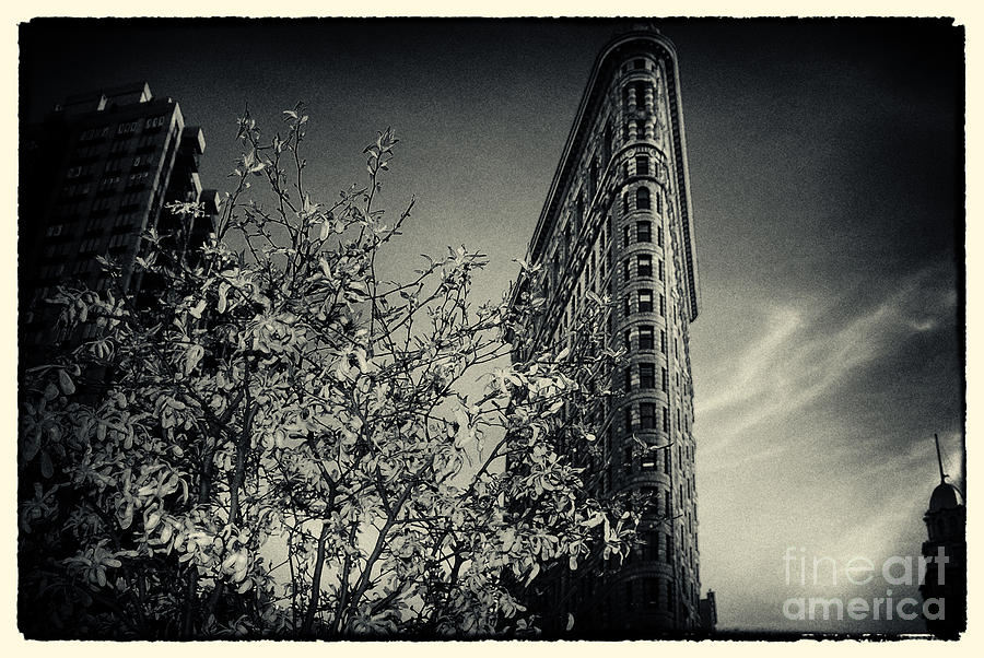 Flat Iron Building And A Magnolia Tree New York City Photograph By