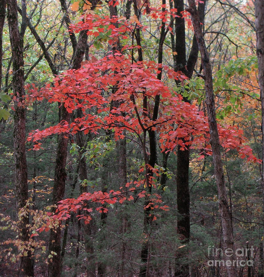 Autumn Photograph - Flaunt It by Fred  Sheridan