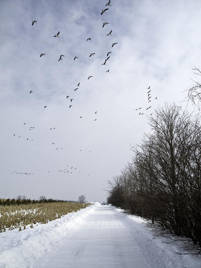 2014 Photograph - Flight by Alan Norsworthy