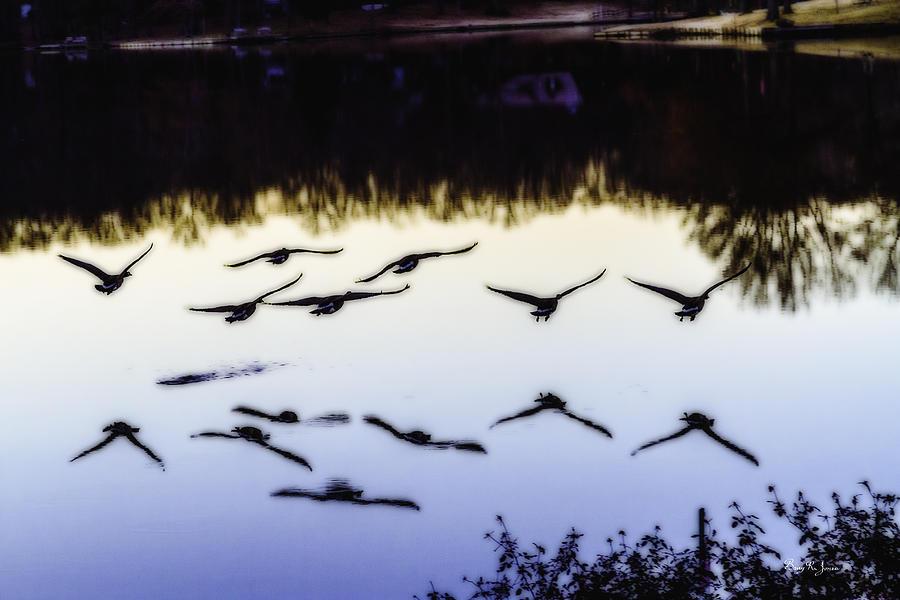Geese Photograph - Flight by Barry Jones