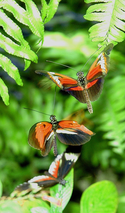 Wild Life Photograph - Flight by  George Griffiths